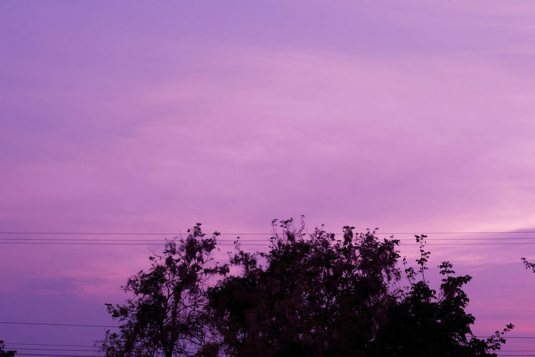 Scenics - Nature Connection Growth No People Tranquility Pink Color Dusk Sunset Cloud - Sky Purple Beauty In Nature Nature Power Line  Electricity  Sky Plant Cable Power Supply Tranquil Scene Tree Technology Telephone Line Outdoors Romantic Sky EyeEm Best Shots EyeEmNewHere EyeEm Nature Lover