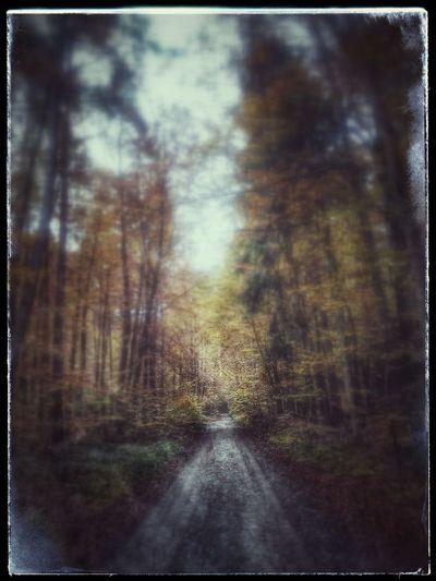 Herbst In Seinen Schönsten Farben in Elsenfeld Autumn Walking Around