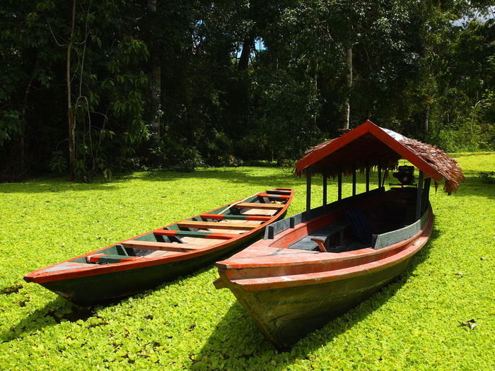 Amazon Tour Adventure Amazonas Beauty In Nature Boat Ecotourism Flora Jungle Lodge Nature Naturelovers Outdoors Peru Plants Rainforest River Southamerica Tour Tranquility Water First Eyeem Photo