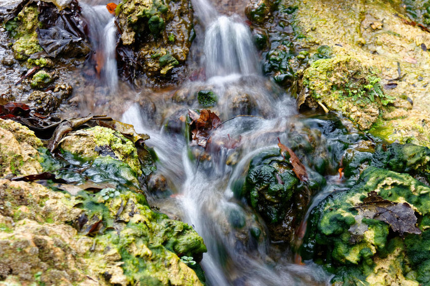 Arroyo de la virgen Agua Arroyo Close-up Creek Water Hojas De Otoño Leafs Spring Water Water