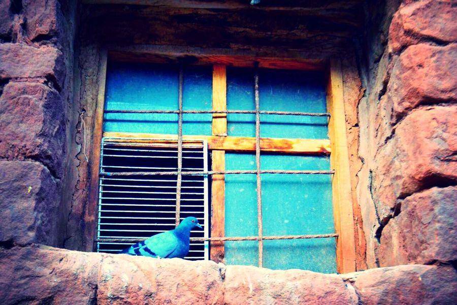 Kuslar Guvercin Pigeon Bird Stone Houses  Old Taşev🏡 Silence Sessizlik Willage Köy Huzur Mutluluk Window Day No People Life Doğa History özgürlük Freedom