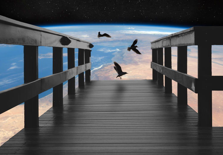 View of seagulls on pier