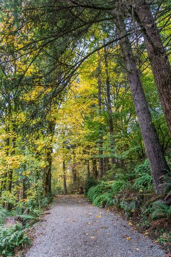 A path at
