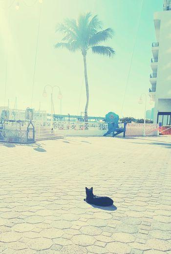 Breakfast with a new friend Breakfast Buddy Cat Sunbathing Sun Vibes Blue Sky Bayside Miami Outdoors