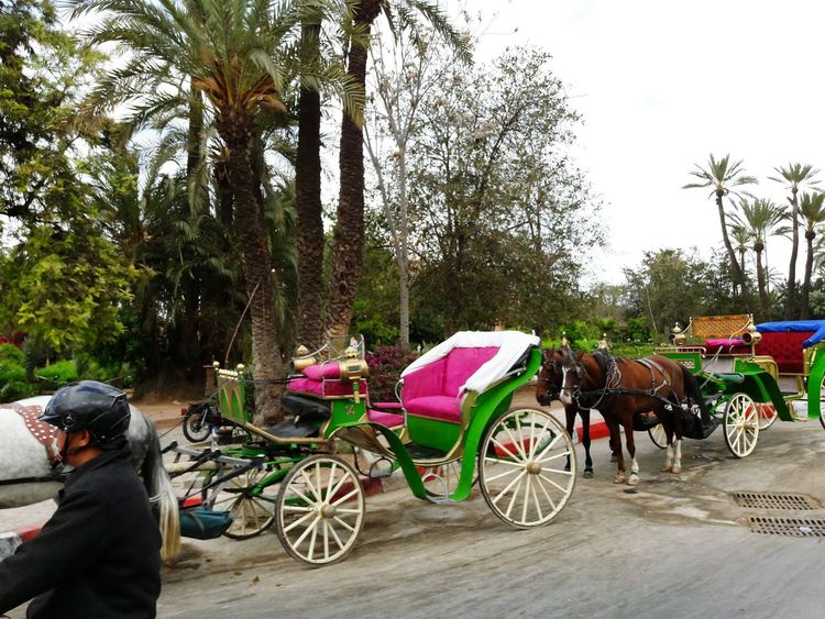 Taking Photos Hello World This Moment Easter Ready Marrakech Morocco Urban Spring Fever Animal Photography Car Ride