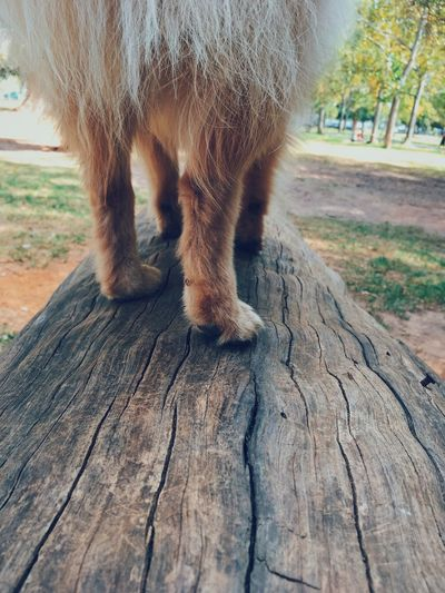Close-up of dog legs. Animal Bark Brown Hues Close-up Color Colour Contrast Dog Dog Legs Park Pattern Paws Puppy Summer Texture Tree