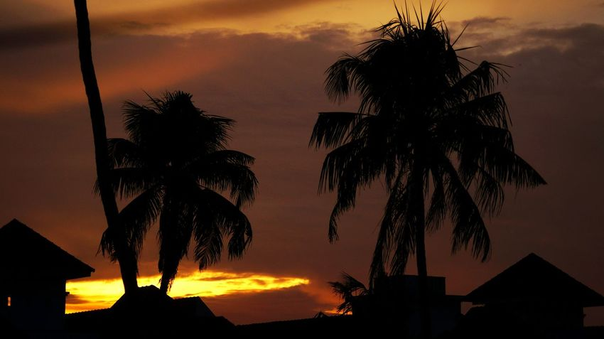 Evening time Coconut Trees Evening Golden View Tree Sunset Silhouette Sky Architecture Cloud - Sky EyeEmNewHere This Is My Skin
