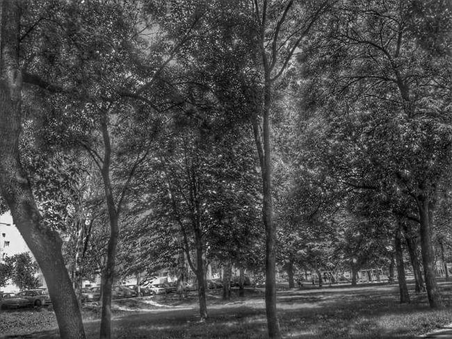 Forest Black & White Tre