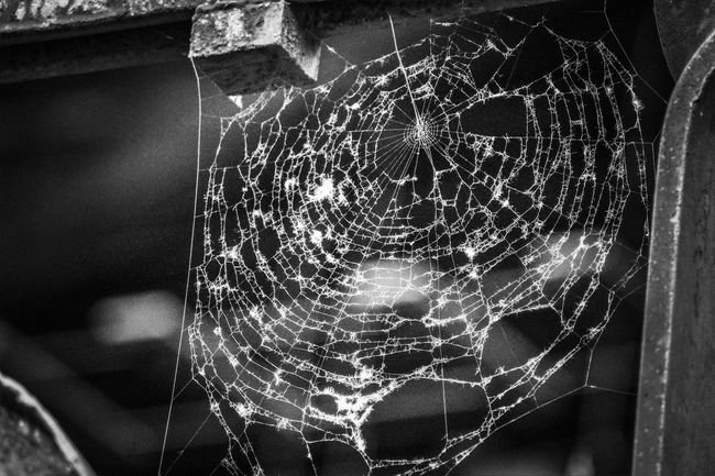 Spider's web Work Of Art By Small Creatures Right Corner Art Animal Marketing Hiding Place Centered Centered Perspective Pull The Strings Through Thick And Thin Arachnophobia Black And White Photography Background Caught Close Up Zoom Cobweb Hanging Around Copy Space Insect Waiting Close-up Spider Trapped Arthropod Spider Web Web Arachnid Prey EyeEmNewHere