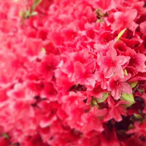Raining ambiance and flowers