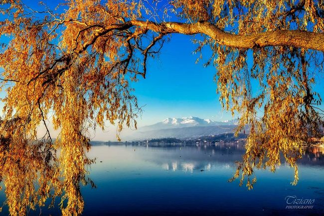 branch autumn Photo : Tiziano ©Photography Autumn Autumn Colors Autumn Leaves Blue Day Lake Landscape Mountain Nature Outdoors Reflection Scenics Sky Tree Viverone Viverone's Lake Water