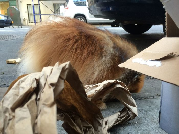 Doggy Dog Trash Paper Camouflage