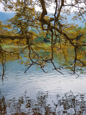 Branches of autumn trees over a pond. Shadow Reflection Branch Branches Branches And Sky Branches And Leaves Branches And Shadow Lake View Lake Reflection Reflections In The Water Reflection Lake Landscape Leaves Tree Water Tree Water Branch Flood Lake Mountain Forest Reflection Backgrounds Sky Swamp Wetland Needle - Plant Part Freshwater Bird