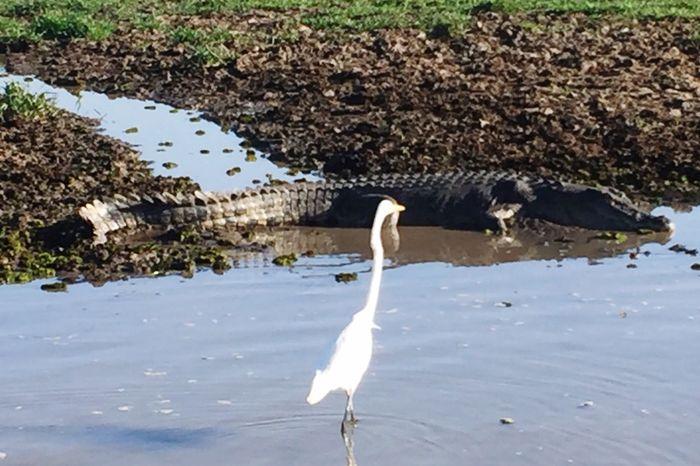Pet Portraits 🤠my Holidays😎 🌏my Life⛩ Crocodile versus Heron