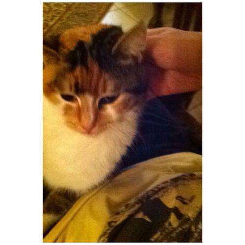 Goodmorning Günaydın Iyihaftasonları Happyweekend Sweet Cat