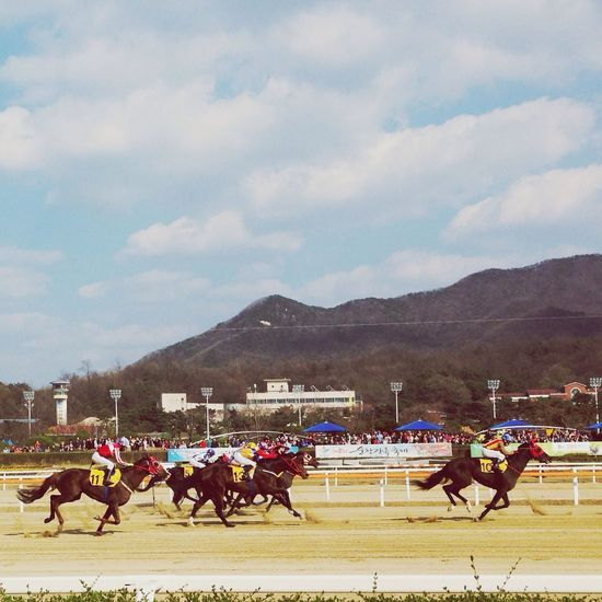 Race Good Times Taking Photos Gaming 경마공원 재밌당 흐흐