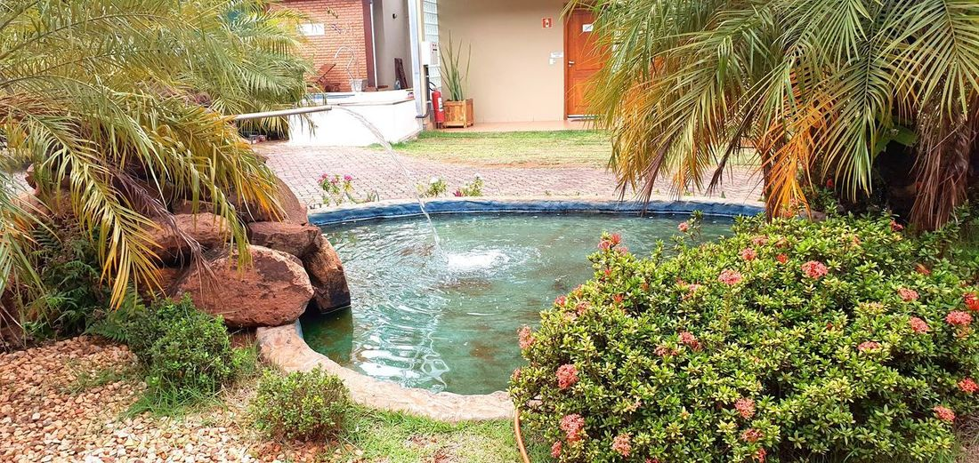 Plants growing in swimming pool against building