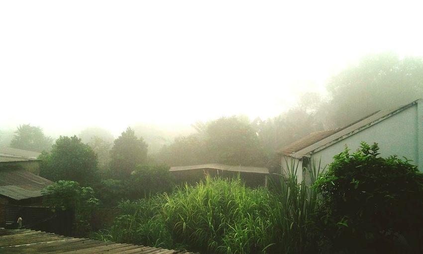 Sương mờ