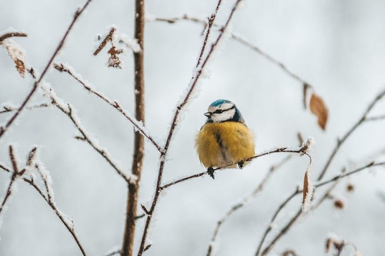 Winter Bird Of