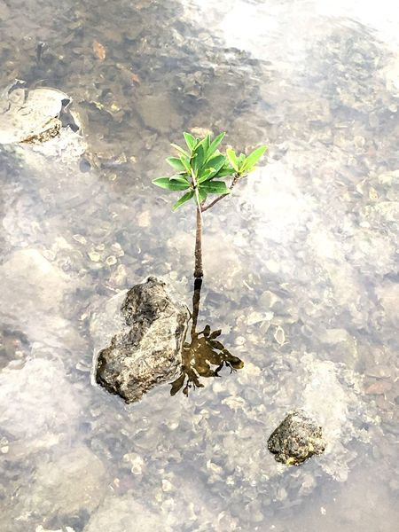 Against the odds. Leaf Plant Water Nature Fragility Waterfront Outdoors Beauty In Nature Focus On Foreground No People Cliff Freshness EyeEm Gallery Fresh On Eyeem  EyeEm Best Shots Eyeemphotography EyeEmbestshots EyeEm Nature Lover EyeEm EyeEmBestPics
