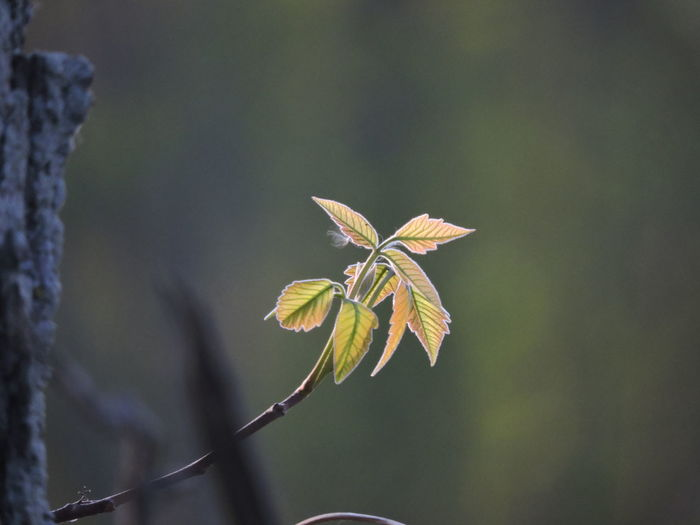New Growth Springtime Plant Growth Beauty In Nature Focus On Foreground Close-up Fragility Vulnerability  Plant Part Leaf Flower Nature Flowering Plant No People Day Freshness Selective Focus Plant Stem Outdoors Petal Flower Head