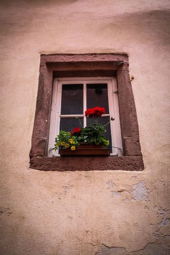 Low angle view of potted plant on window sill