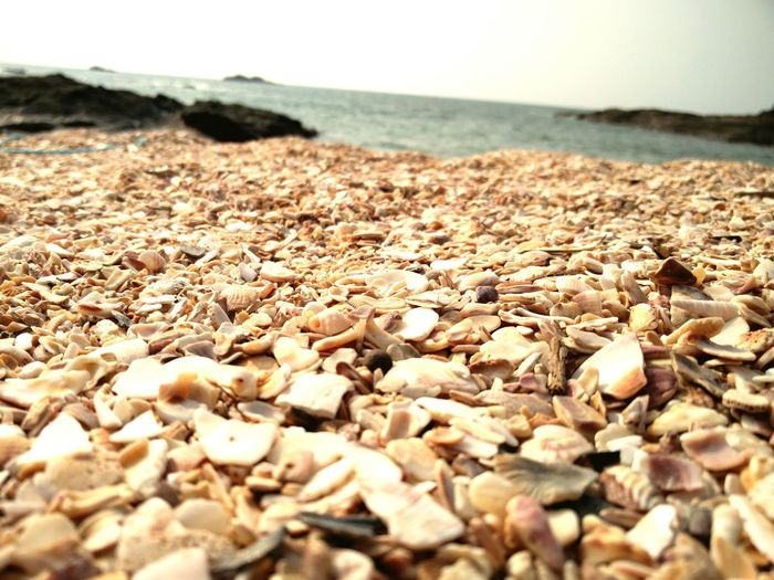 Saint Mary's Island Seashells From The Seashore Mangalore Oneplustwo The KIOMI Collection