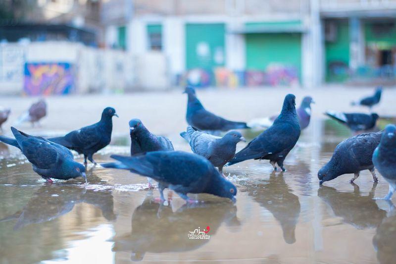Bird Water No People Outdoors First Eyeem Photo Streetphotography Morning Light Birds🐦⛅ Birds Drinking Water