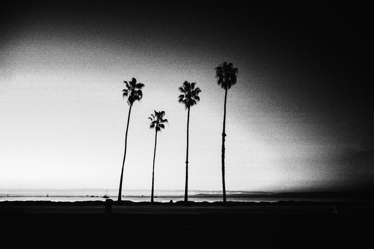 California California Coast California Dreamin Beach Beauty In Nature Blackandwhite Blackandwhite Photography Clear Sky Horizon Over Water Palm Tree Sea Tranquil Scene