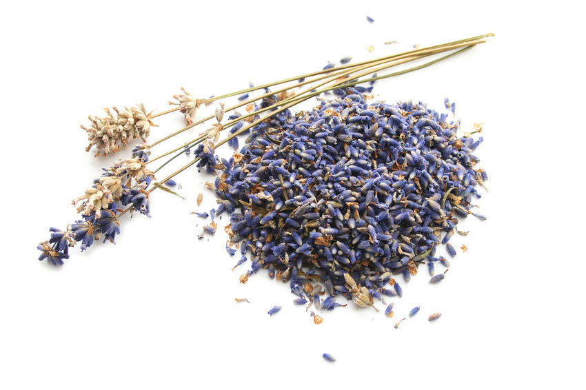 Close-up Day Dried Lavender Freshness Lavender Nature No People Studio Shot White Background