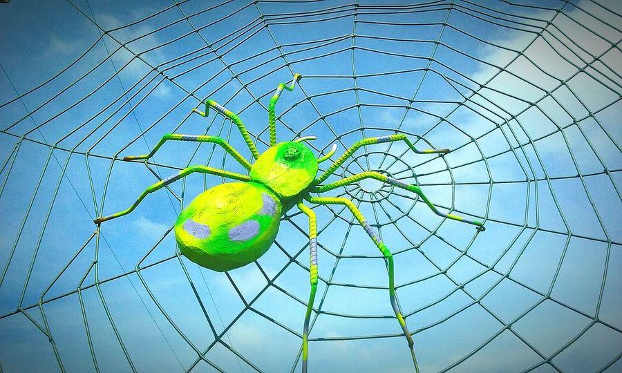 Close-up Spider Web Spider's Web Built Structure