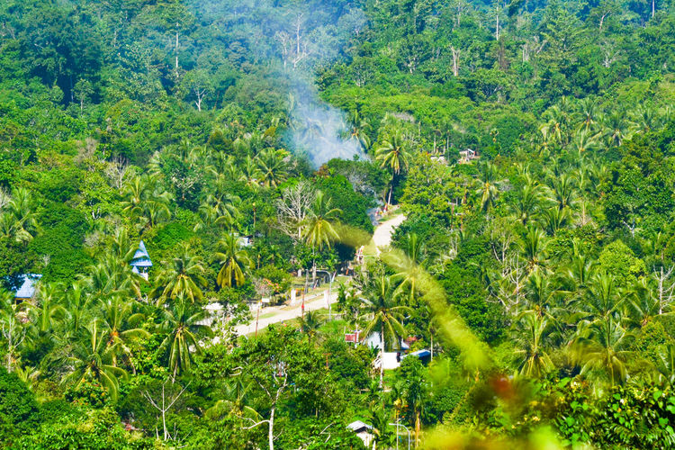 village view Bintulu INDONESIA Beauty In Nature Bintunibay Day Grass Green Color Growth High Angle View Manimerivillage Nature No People Outdoors Papua Plant Scenics Tree Village Village Life Village View Westpapua