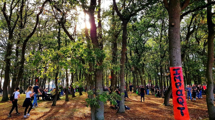 Trees Tree Area