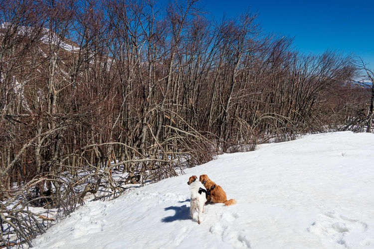 View of a dog on snow covered land