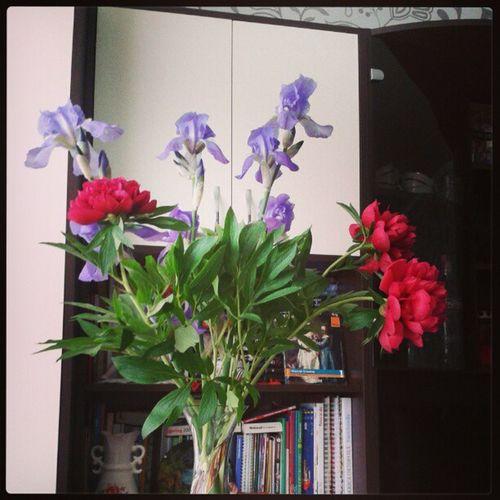 Peonies in love ♡. They bloomed throughout the night ^^. Iris Peony  Bujor Fleurdelis