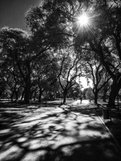 Parque Patricios, Buenos Aires, Argentina. Winter 2016. Parque Patricios Sun Sunlight Light And Shadow black and white Blackandwhitephoto Blancoynegro Black&white Blackandwhite Photography Blackandwhite Blackandwhitephotography Black And White Photography Black And White Black & White trees Park Trees IPhone Photography IPhone 6s Plus IPhoneography IPhone Only IPhone 6s+