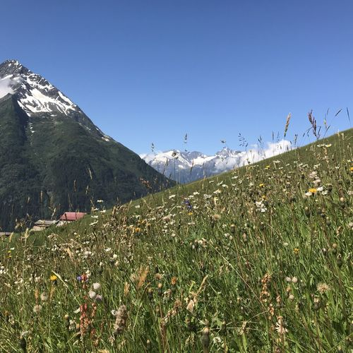 Alps Smartphonephotography Meadow Mountain Environment Plant Landscape Grass Sky Nature Tranquil Scene