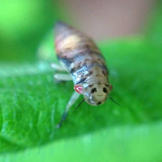 #improvedimage #macro # insect #bug #nymph #shieldbug Macro Bug Improvedimage Nymph Shieldbug