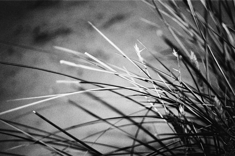 Abstract At Night Beach Black & White Detail Grass Growth Lines And Shapes Nature
