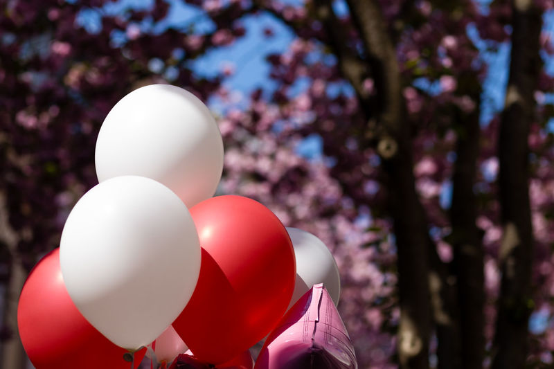 Close-up of balloons against trees