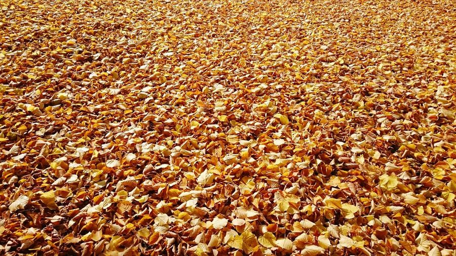 Just Leafs Autumn Colors From My Point Of View Taking Photos Enjoying Life A Sunny Autumn Day Natures Treasures