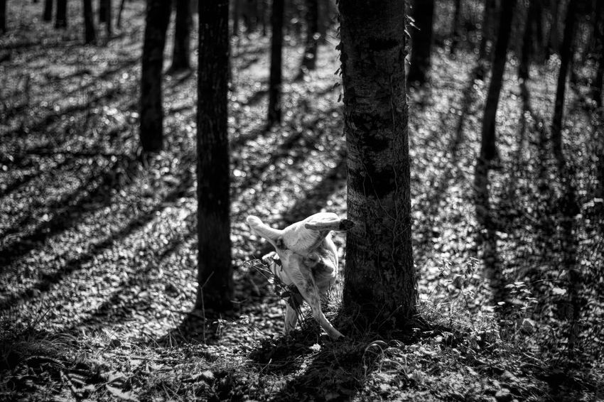 Dog Black & White Outdoors Outdoor Photography Portrait Animals In The Wild Smile Forest Photography