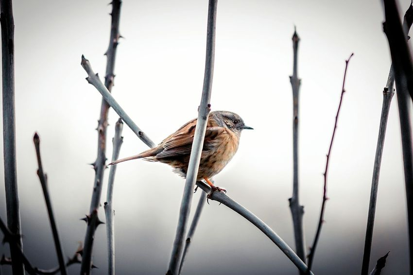 Animal Wildlife Animals In The Wild One Animal Focus On ForegroundFoggy Landscape Sky Fog Tree Perching Animal Themes Bird No People Day Nature Outdoors Close-up Canon Beauty Autumn Winter Solace Solitude