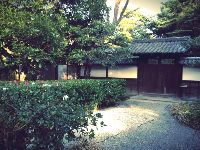 Kyoto Japanese Hedge Japan Koukyo Gaien The Way Of Tea Camellia Sasanqua