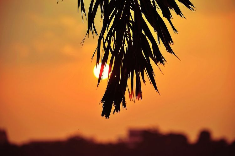 how is your sunset shot ? Sky_collection Enjoying Life Sunset Eye4photography