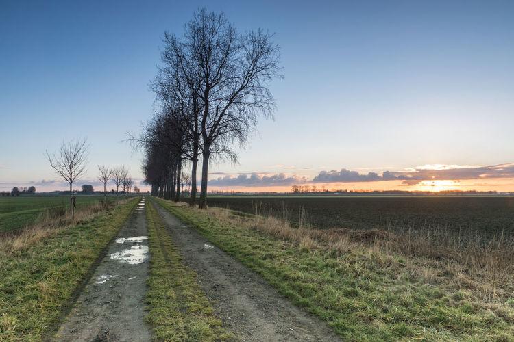 Tree line at sunrise at Sint Pietersdijk, Sluis EyeEm Market © Field Landscape Road Tranquil Scene Sunrise Tree Line Sony A77ii Zeeuws Vlaanderen Zeeland  The Netherlands