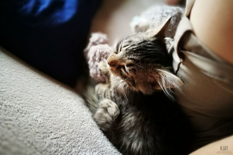 Bubu CDRE Cats Cat Kitten Cute Cute Pets Pet Animal Sleeping Sleeping Cat Chilling Sitting Animal Head  Comfortable Depth Of Field HuaweiP9 Relaxing Eye4photography  Streamzoofamily EyeEm Masterclass Cats Katzen TabbyCat Young Tiere Cat Lovers