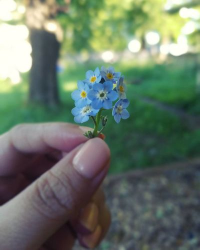 Human Hand Human Body Part One Person Flower Hand Holding People Nature Outdoors Close-up Summer Plant Day Fragility Adult Lifestyles One Woman Only Only Women Flower Head Flowers Tiny Bouquet Blue Flower