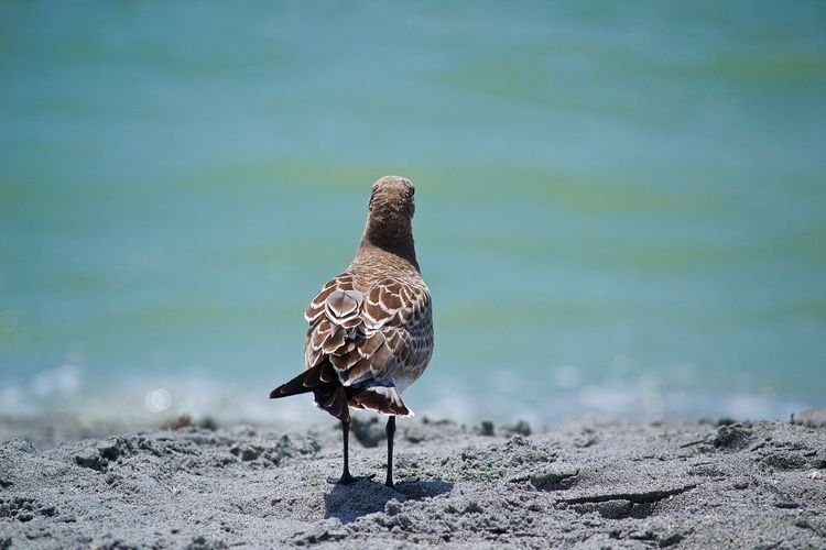 Animal Themes Animal Wildlife Animals In The Wild Beach Bird Day Feathers Full Length Nature No People Ocean One Animal Outdoors Perching Ponder Pondering Sand Seagull Water EyeEmNewHere