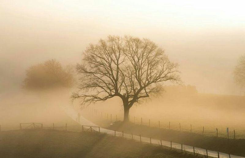Fog Tree Sunbeam Beauty In Nature Autumn Sun Sunlight